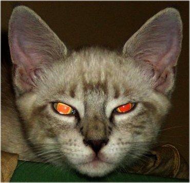 Halloween Cat Blogging