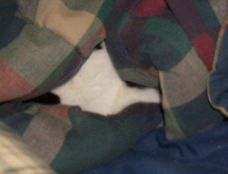 Cold Cat Blogging