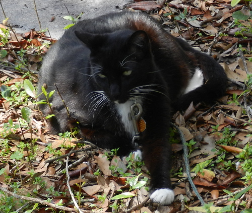 Friday Cat Blogging