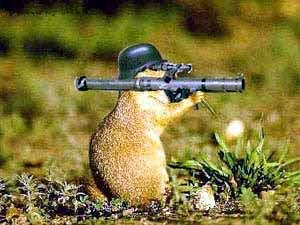 Militant Groundhog