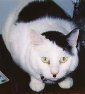 Kos's Cat Blogging