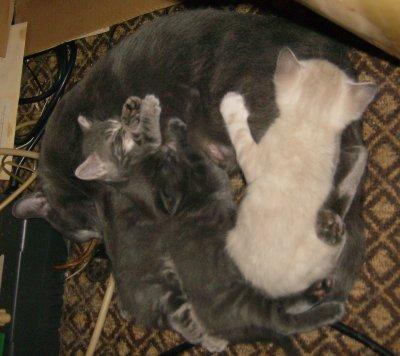 Friday Kitten Blogging