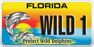 Florida Wild Dolphin plate