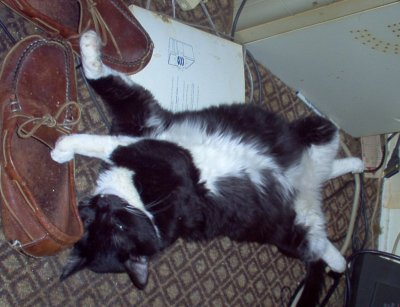 Friday Cat Blogging